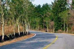 La disfatta nella foresta sull'isola di Jeju Fotografia Stock
