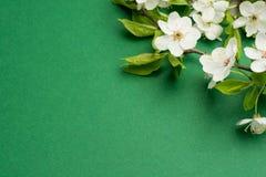 La disposición creativa hecha con las flores del árbol florece en fondo verde claro Endecha plana Concepto mínimo de la primavera fotos de archivo