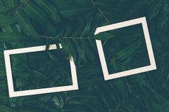 La disposición creativa hecha de verde se va con dos marcos blancos Visión superior, endecha plana Imagenes de archivo