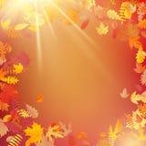 La disposición de la plantilla del otoño adorna con las hojas EPS 10 libre illustration