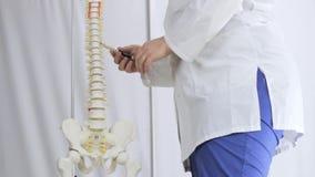 La disposición médica de la espina dorsal, doctor señala a las vértebras metrajes