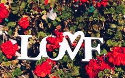 La disposition créative avec les fleurs colorées, les feuilles et le Word AIMENT Lov Image libre de droits