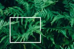 La disposition créative, fougère verte part avec le cadre de place blanche, configuration plate, photos stock