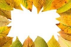 La disposition saisonnière des feuilles de flétrissement accomplissent le cadre Photo stock