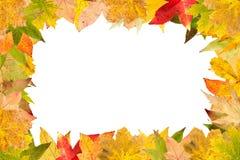 La disposition saisonnière des feuilles de flétrissement accomplissent le cadre Photographie stock libre de droits