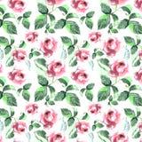 La disposition tendre des roses roses modèlent le croquis de main d'aquarelle Images libres de droits