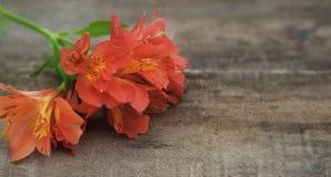 La disposizione dei fiori arancio rossa di Astromeria di Alstroemeria sopra il piano di legno rustico della Tabella pone lo spazi Immagini Stock Libere da Diritti