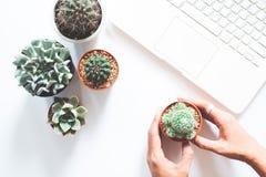 La disposizione piana del cactus e del succulente con la mano ed il computer portatile della donna su fondo bianco, ama la terra Fotografie Stock