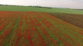 La distanza dal campo verde e la transizione al campo rosso Vista dell'occhio del ` s dell'uccello video d archivio