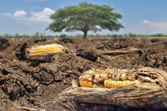 La distruzione delle foreste per coltivazione mobile Immagine Stock Libera da Diritti