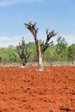 La distruzione delle foreste per coltivazione mobile Immagini Stock Libere da Diritti