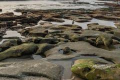 La diversidad honra el paisaje costero de California Imagen de archivo libre de regalías