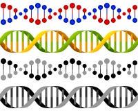 La DNA inconsútil trenza concepto Foto de archivo libre de regalías
