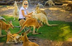 La donna alimenta i canguri immagini stock