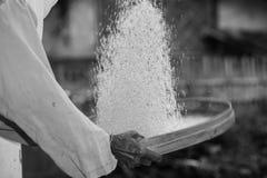 La donna anziana indonesiana spula il riso Immagini Stock Libere da Diritti