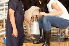 La donna asiatica impara mungere una mucca Immagini Stock