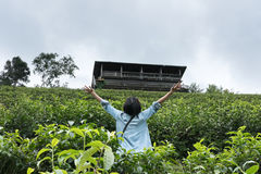 La donna asiatica solleva la sua mano nell'azienda agricola del tè Piantagione di tè il gr fresco Immagini Stock Libere da Diritti
