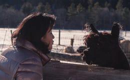 La donna bacia un'alpaga Immagini Stock Libere da Diritti