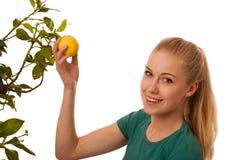La donna bionda che raccoglie i grandi, limoni gialli da organicamente si sviluppa Immagini Stock Libere da Diritti