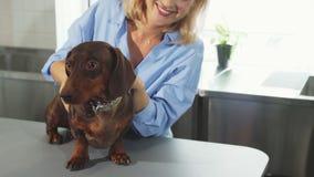 La donna bionda sta segnando il tasso-cane tedesco video d archivio