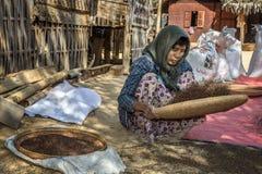 La donna birmana dell'agricoltore trebbia il cereale Fotografia Stock