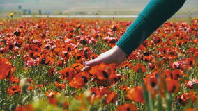 La donna cammina su un campo Poppy Among Flowering Red Poppies archivi video