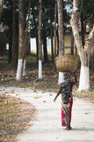 La donna che lavora nel tè sistema in Srimangal, Bangladesh Fotografie Stock Libere da Diritti