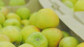 La donna che seleziona le mele rosse fresche in drogheria produce il dipartimento stock footage