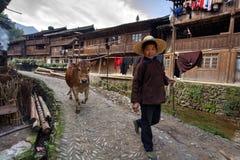La donna cinese conduce lungo la mucca di marrone della via del villaggio, tenente la corda Immagini Stock Libere da Diritti