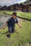 La donna cinese lavora al vecchio giacimento del riso, in acqua ginocchio-profonda Immagini Stock Libere da Diritti