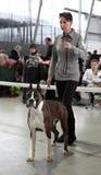 La donna con il cane Immagini Stock Libere da Diritti