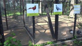 La donna con la figlia gode di agli uccelli esotici nella gabbia dello zoo archivi video