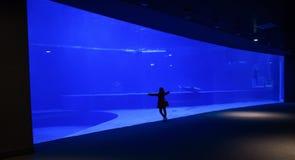 La donna da solo ammira un grande acquario fotografia stock