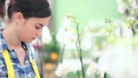 La donna del fiorista che cammina nel giardino dei fiori, si alza e controlla un vaso delle orchidee archivi video