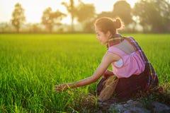 La donna dell'agricoltore che si siede in riso verde ha archivato al tramonto, Tailandia Fotografie Stock