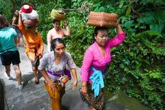 La donna di balinese che porta le offerti per il rituale indù quotidiano è una tradizione, la foresta della scimmia, Bali, Indone fotografia stock libera da diritti