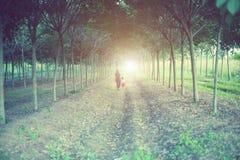 La donna ed il bambino che si tengono per mano al tramonto Fotografia Stock Libera da Diritti