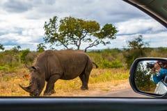 La donna fotografa il rinoceronte da una finestra di automobile Immagini Stock