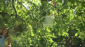 La donna graziosa del giardiniere con i vasi da fiori dell'acqua dell'annaffiatoio appende sull'albero da frutto nel giardino del archivi video