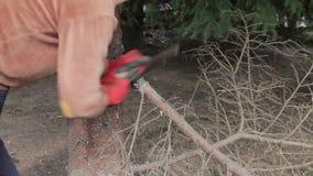 La donna ha tagliato un ramo di albero dal seghetto a mano per metalli stock footage