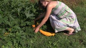 La donna incinta del giardiniere riunisce la verdura matura dello zucchini in giardino Fotografia Stock
