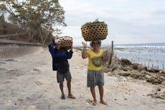 La donna indonesiana continua il canestro capo con alga Fotografia Stock Libera da Diritti