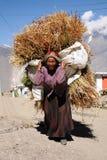 La donna lavora come portatore, Nepal Immagine Stock