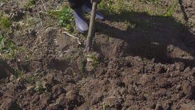 La donna lavora nel giardino con una pala stagione della semina nelle zone rurali stock footage