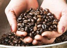 La donna lavoratrice dura passa i chicchi di caffè della holding Fotografie Stock
