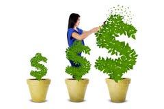 La donna mantiene l'albero dei soldi Immagini Stock Libere da Diritti