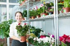 La donna matura sceglie il fiore fotografia stock