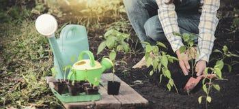 La donna nel giardino fa la piantatura dei semi Ragazza che pianta le piantine immagini stock