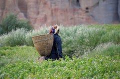 La donna nepalese va raccogliere le verdure nel giardino, con un canestro dietro il suo indietro, nel villaggio di Chusang Immagini Stock