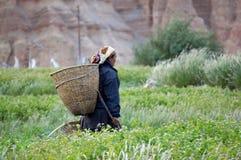 La donna nepalese va raccogliere le verdure nel giardino, con un canestro dietro il suo indietro, nel villaggio di Chusang Fotografia Stock Libera da Diritti